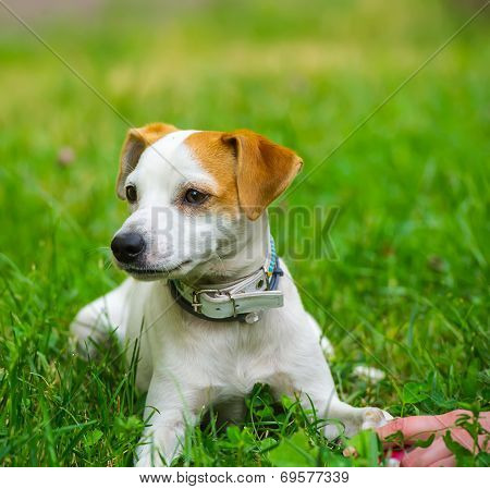 Hand And Dog