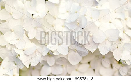 Beautiful Floral Background In Blue Colors