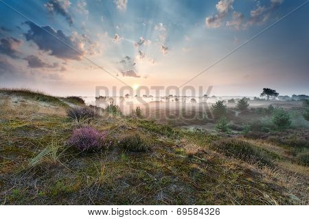 Misty Sunrise Over Dunes With Flowering Heather