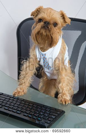 Dog And The Computer