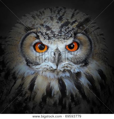 The evil eyes. The Eagle Owl, Bubo bubo.