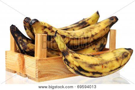 Plantain Banana I
