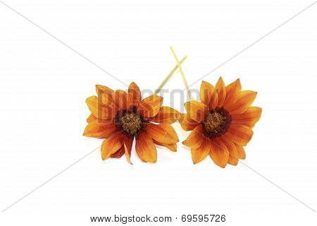 Orange And Brown Midday Flower