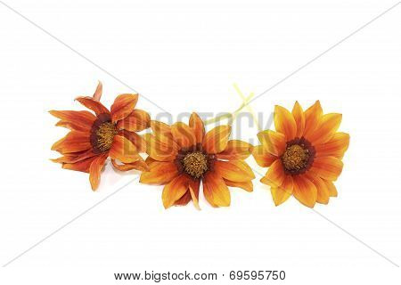 Fresh Orange And Brown Midday Flower