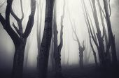 picture of eerie  - Dark eerie Halloween forest with mysterious fog - JPG