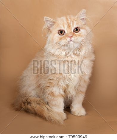 Striped Red Fluffy Cat Scottish Fold Sits On Yellow
