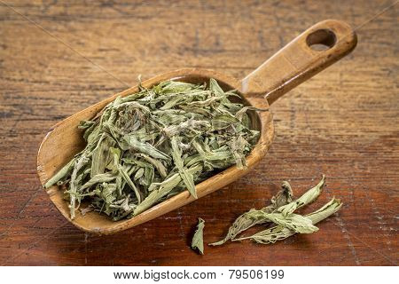stevia dried leaves in a rustic wooden scoop- natural sweetener, sugar substitute