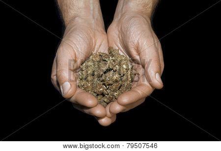 Hands Holding Marijuana