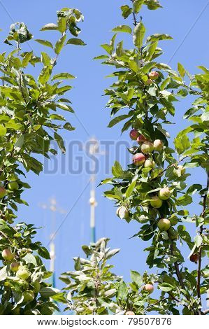 apple-tree branch against the blue sky