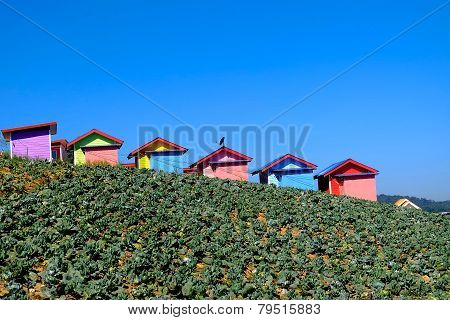 Cottage In The Cabbage Field