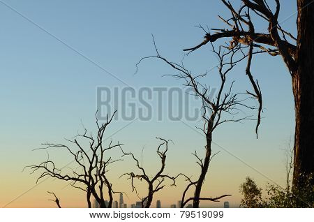 city behind tree branches during sunset