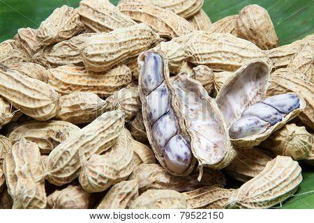 Peanut Boiled On Banana Leaf 04