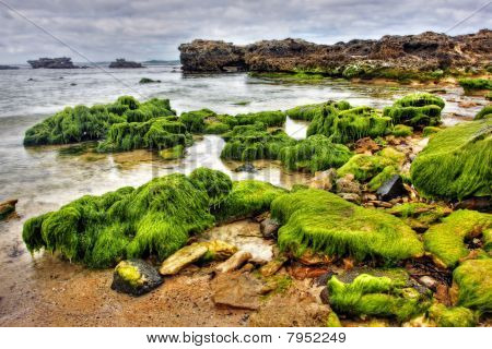 Vibrant Coastal Vista