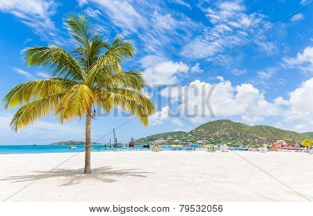 Palm Tree On St Martin Beach