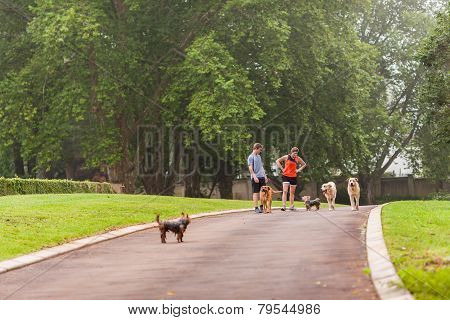 Girl Boy Walking Dogs