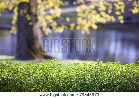 Yellow leaves on a background of green grass
