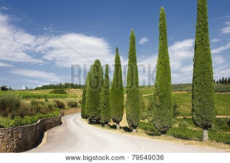 A Typical Landscape Of Tuscany
