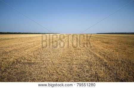boundless field after harvest