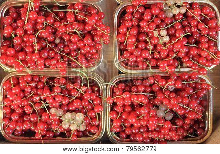 Fresh ripe currant
