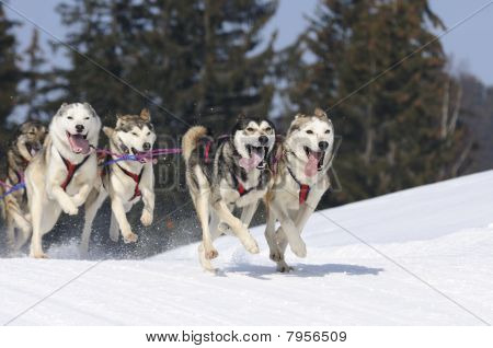 Active dogs in the snow