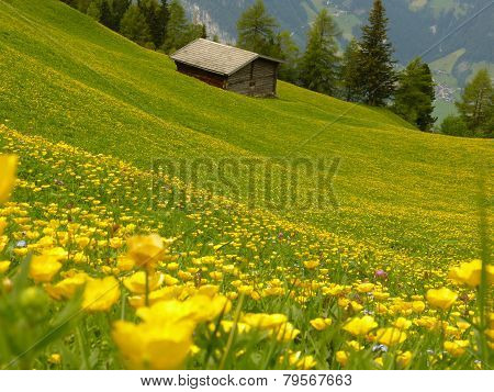 Alpine hut in the spring meadow
