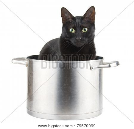 Mom's best helper - a black cat sitting in a sauce pot, ready to help with cooking