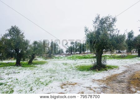 Snow In The Galilee