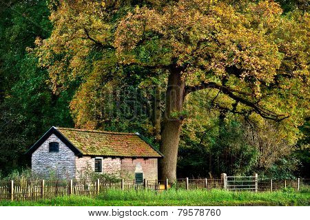 House Under A Big Tree