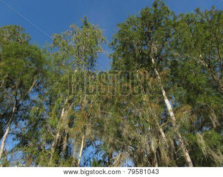 Edge of a Florida Swamp