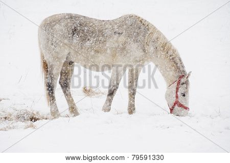 Horse feeding in winter time