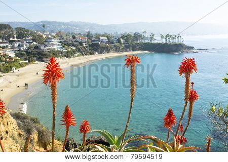 Bright orange Aloe Vera cactus blooms framed against a beautiful beachfront cove with turquoise water in Laguna Beach, California.A