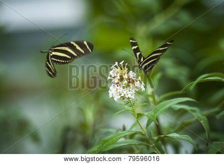 Butterfly on a flower, botanic garden, volcji potok, Kamnik, Slovenia
