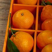 image of clementine-orange  - Tangerines or Mandarin orange in the orange box - JPG