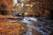 stock photo of trout fishing  - the nature of England, a journey through England, hike in the forest, trout fishing, fishing in the river, forest waterfall, autumn forest ** Note: Visible grain at 100%, best at smaller sizes - JPG