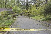 picture of tree lined street  - A neighborhood road is blocked by a large oak tree and downed power lines after a spring storm - JPG