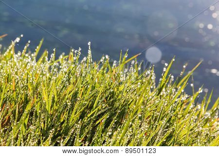 Grass covered in morning dew
