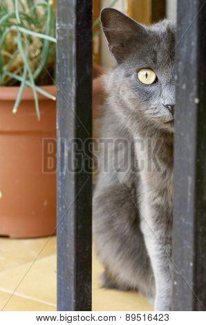 cat head over defocused background