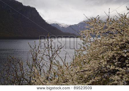 Flowering Tree In Norway