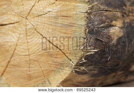 Texture Saw Cut On A Wooden Beam