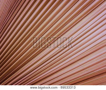 Palm Leaf Texture Background