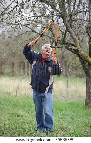 Agriculture, Pruning In Orchard, Senior Man Working