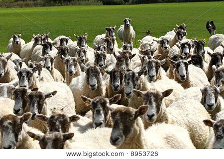 Curious Flock