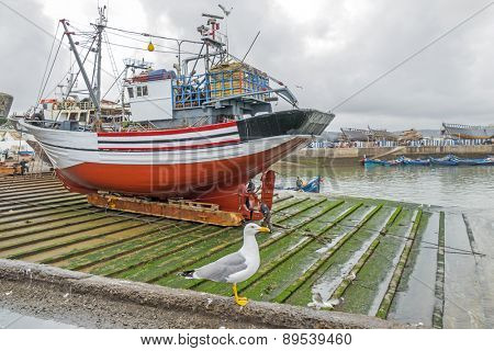 AS-SAWIRA, MOROCCO, APRIL 7, 2015: Seagull poses in front of fishing boat in port of As-Sawira