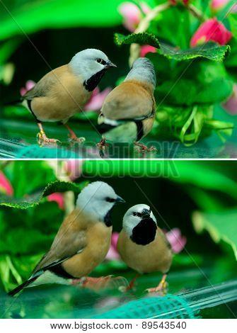 Two Beautiful Little Birds
