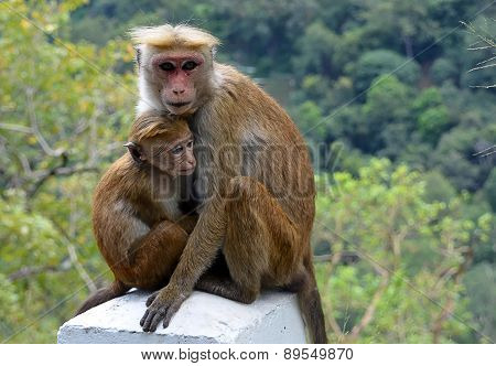 Moneky With Baby Sitting By The Road