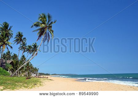 Tropical Beach With Palms And Blue Sky By The Sea