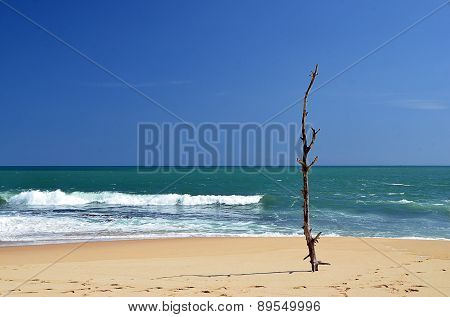 Old Small Tree On The Beach And Blue Sky By The Sea