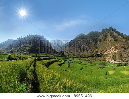 Agricultural Terrace Fields