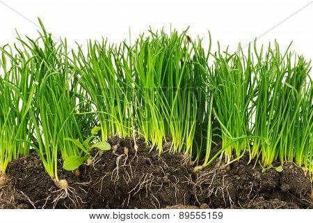 Section Of Plants With Roots And Soil Isolated On White Background