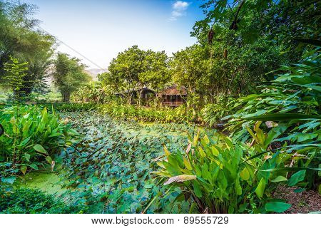 Lotus Pond Around With Green Tree And Small Hut